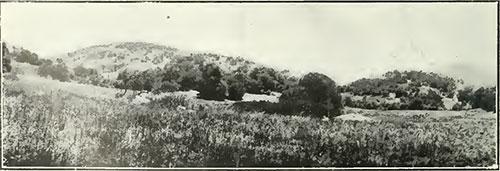 San Diego County photo image