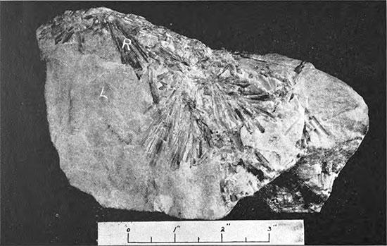 Lepidolite photo image